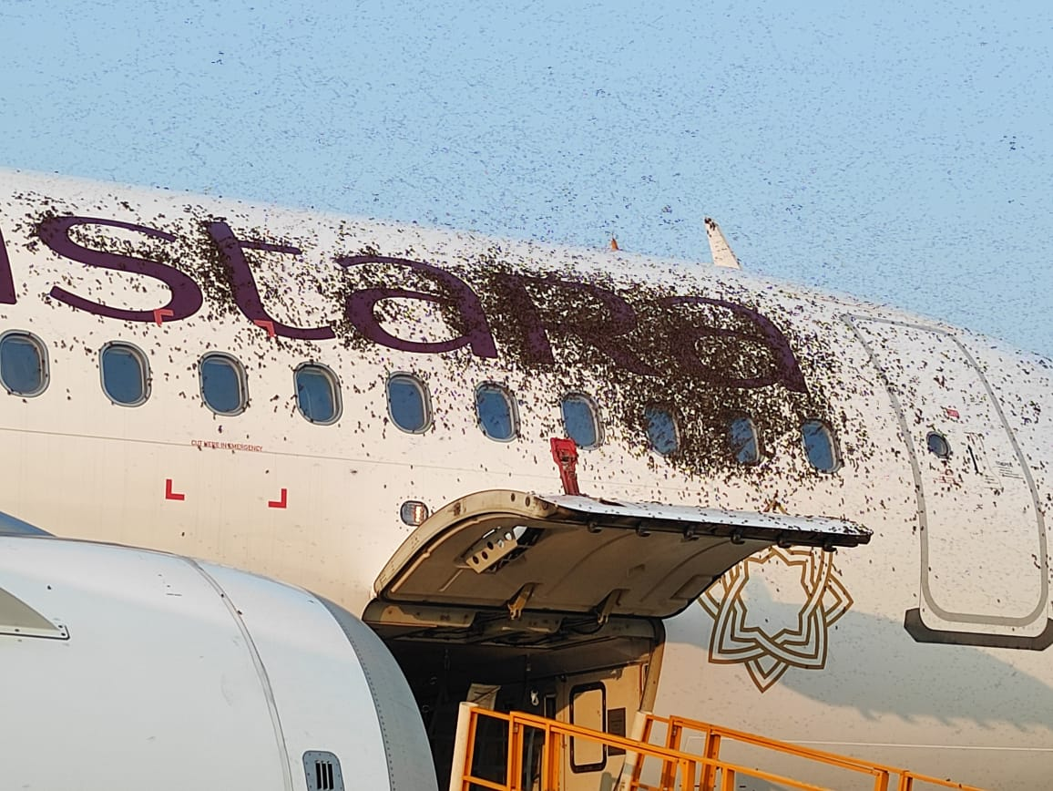 Huge swarm of bees stuck on Vistara aircraft gets Twitter buzzing