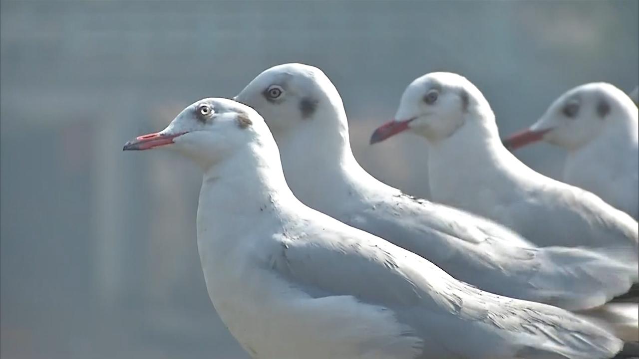 Watch: migratory birds flock to Gujrats Surat