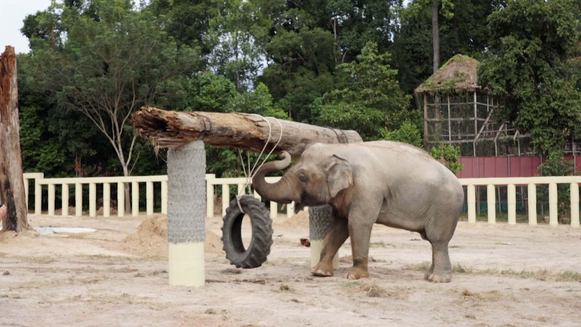 Happily ever after: Kaavan begins enjoying Cambodia home