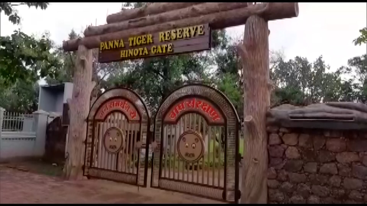 MP: Radio-tagging of vultures at Panna Tiger Reserve